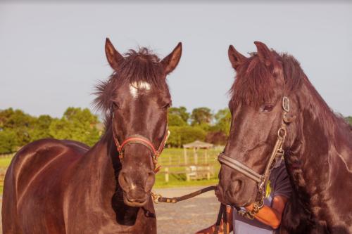 HorseDetail 85230