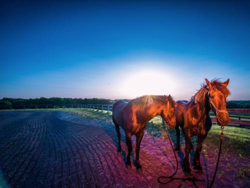 HorseSunrise 85350