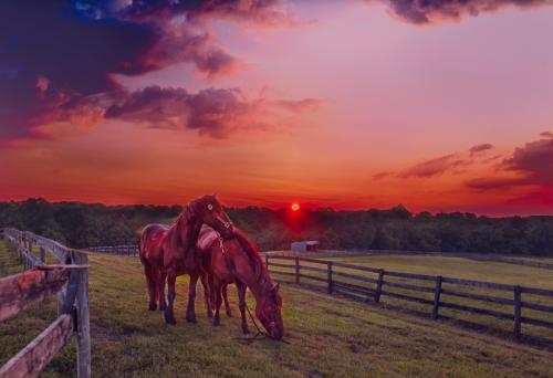 HorseSunrise 85503
