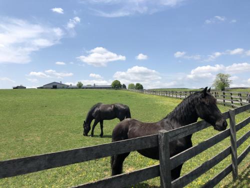Horses8243